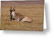 Eland Antelope In Kenya Greeting Card