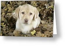 Labrador Retriever Puppy Greeting Card