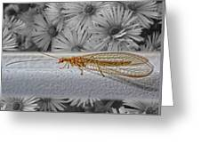 Lacewing Helps In The Garden 2 Greeting Card