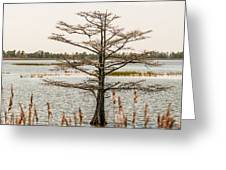 Lake Mattamuskeet Nature Trees And Lants In Spring Time  Greeting Card