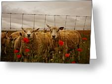 Lambs Greeting Card