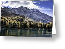 Larch Pine Reflections Greeting Card