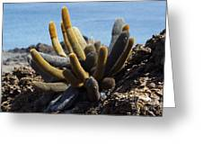 Lava Cactus Galapagos Greeting Card