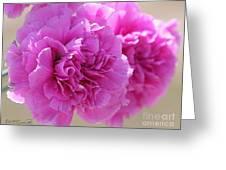 Lavender Carnations Greeting Card