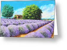 Lavender Lines Greeting Card