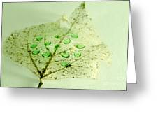 Leaf With Green Drops Greeting Card