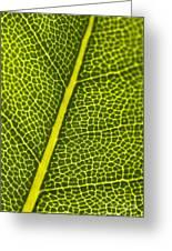 Leafy Details Greeting Card