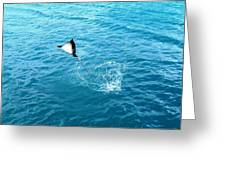 Leaping Stingray Greeting Card