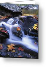 Leaves In Little River Great Smoky Greeting Card