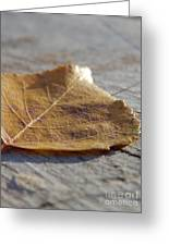 Leaves Greeting Card by Jennifer Kimberly