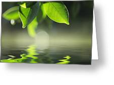 Leaves Over Water Greeting Card
