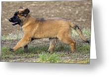 Leonberger Puppy Greeting Card