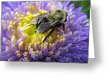 Light Nectar Greeting Card
