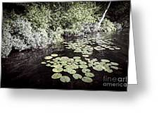 Lily Pads On Dark Water Greeting Card