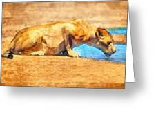 Lioness Drinking Greeting Card