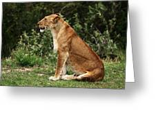 Lioness On The Masai Mara  Greeting Card