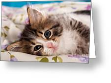 Little Cat Kitten Greeting Card