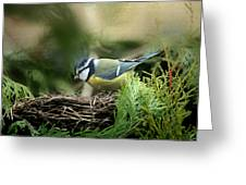 Little Tit Greeting Card