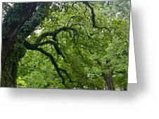 Live Oak Tree At Oak Alley Plantation Greeting Card