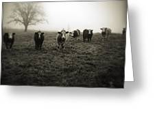 Livestock Greeting Card
