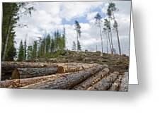 Logpile At A Clear Cut Area Greeting Card