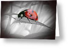 Lone Ladybug Greeting Card
