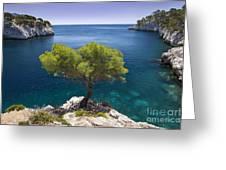 Lone Pine Tree Greeting Card