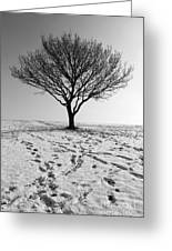 Lone Tree Winter Greeting Card