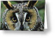 Long-eared Owl Up Close Greeting Card