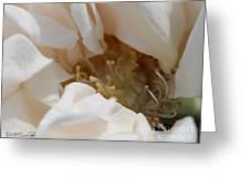 Long-stemmed White Rose Greeting Card