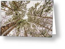 Looking Up At Snow Covered Tree Tops Greeting Card