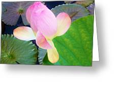 Lotus Lilly Greeting Card