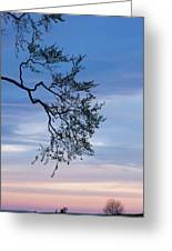 Low Angle View Of Tree At Dawn, Dark Greeting Card