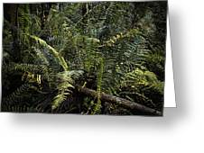 Loxahatchee Refuge-4 Greeting Card