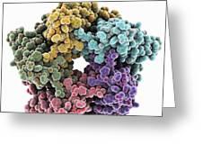 Lumazine Synthase Molecule Greeting Card