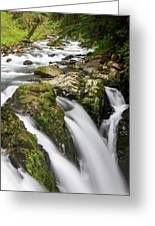 Lush Waterfall Olympic National Park Greeting Card