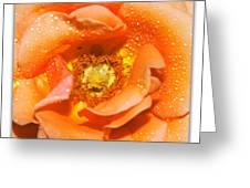 Macro Image Of A Rose Greeting Card