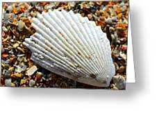 Macro Shell On Sand Greeting Card