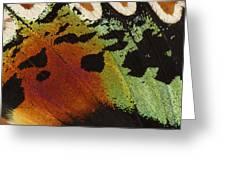 Madagascan Sunset Moth Wing Detail Greeting Card