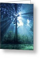 Magical Light Greeting Card