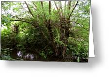 Magical Tree In Forest Greeting Card