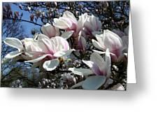 Magnolia  Twig Greeting Card