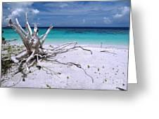 Maldives 11 Greeting Card by Giorgio Darrigo