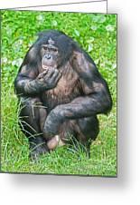 Male Bonobo Greeting Card