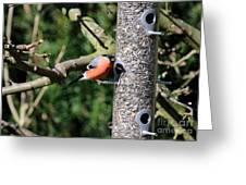 Male Bullfinch Greeting Card