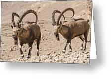 Male Nubian Ibex Greeting Card