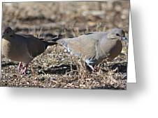 Male White Wing Doves Greeting Card