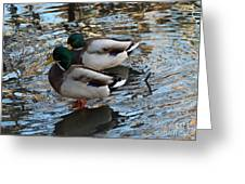 Mallard Drakes  Greeting Card