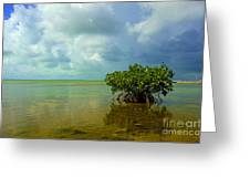 Mangrove Greeting Card