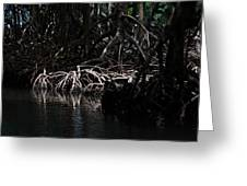Mangrove Forest Of The Los Haitises National Park Dominican Republic Greeting Card
